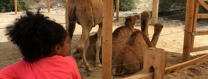 Camel Exhibit is one of Ryanさんのお気に入りスポット.