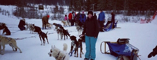 Howling Dog Tours is one of #ExploreAlberta.