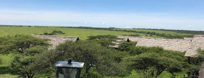 Ndutu Conservation Area is one of Geziyorum Dünya Işte.