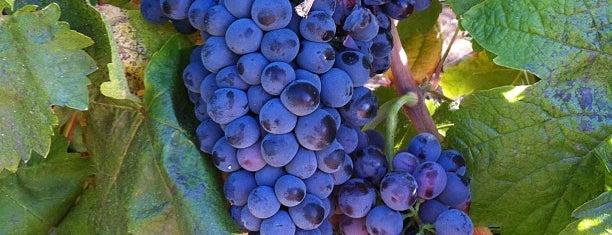 Adega da Cartuxa is one of Wine World.