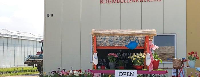 De Tulperij is one of Amestrdam.