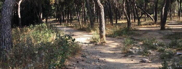 Πάρκο πρώην Σχολής Ευελπίδων is one of Posti che sono piaciuti a Sotiris T..