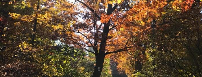 Wychwood Park is one of Toronto Neighbourhoods.