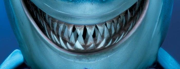 Tech Trailer - Theatre In The Wild is one of Best Of DizKnee.