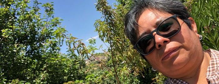 Tlazala is one of Lugares favoritos de Edith.