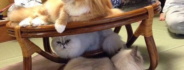 猫の時間 きた本店 is one of Favorite Cats.