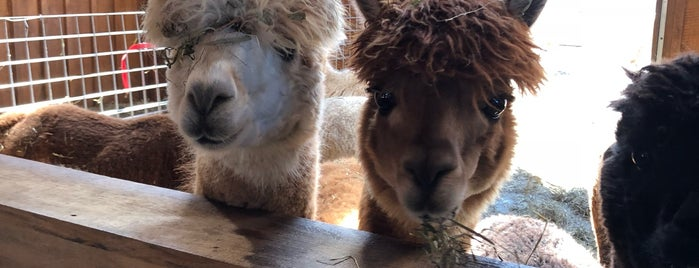 Buck Brook Alpacas is one of Upstate NY and the Catskills.