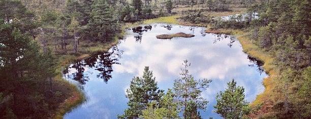 Viru raba vaatetorn is one of Baltic Road Trip.