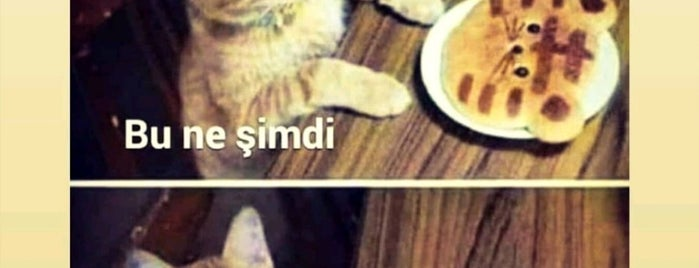 Fenerbahçe Orduevi Piknik Cafe is one of Lugares favoritos de Korhan.