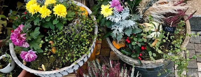 Botanica is one of Lucie'nin Kaydettiği Mekanlar.