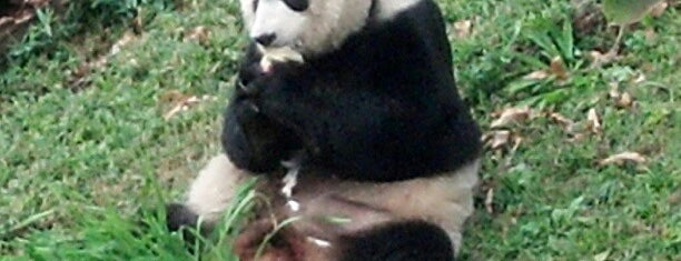 Giant Panda House is one of A Day in D.C..