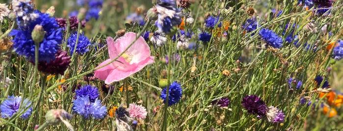 Washington Lavender Farm is one of Olympic National Park.