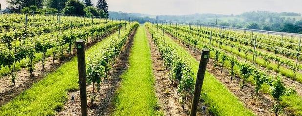 M & M Vineyards is one of Wineries.