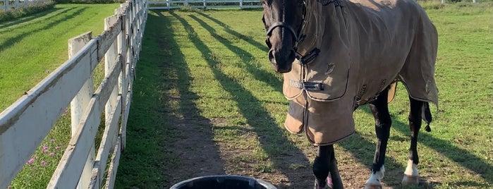Desiderio, Ltd. is one of Equestrian.