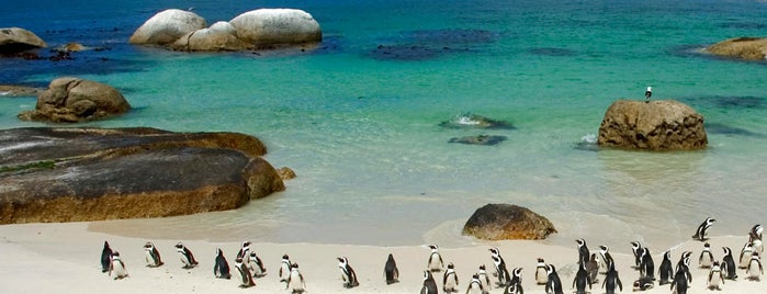 Boulders Beach Penguin Colony is one of lua de mel.