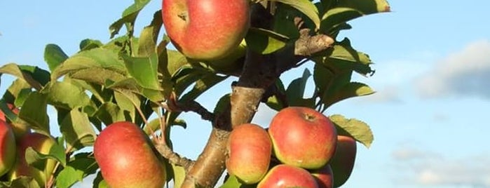 The Best Apple-Picking Orchards in America