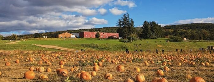 Fishkill Farms is one of The Best Apple-Picking Orchards in America.