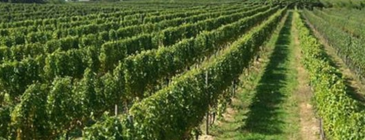 Jamesport Vineyards is one of The NYC Bar Guide.
