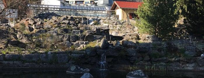 Botanischer Garten Innsbruck is one of J : понравившиеся места.