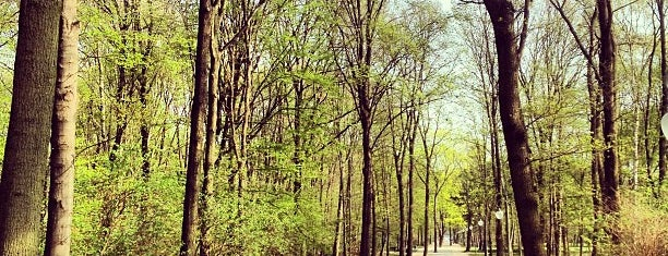 Großer Tiergarten is one of Mete 님이 좋아한 장소.