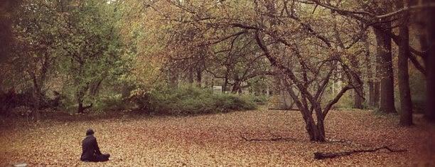 Tiergarten is one of A few days in Berlin.