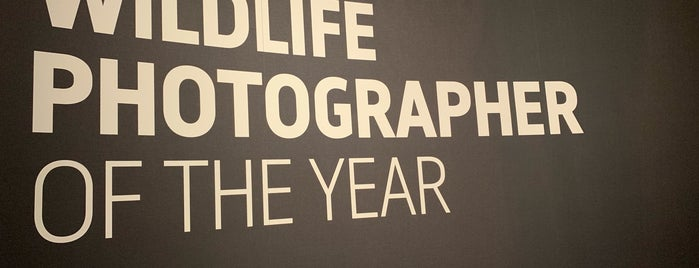 Wildlife Photographer of the Year is one of สถานที่ที่ Lewis ถูกใจ.