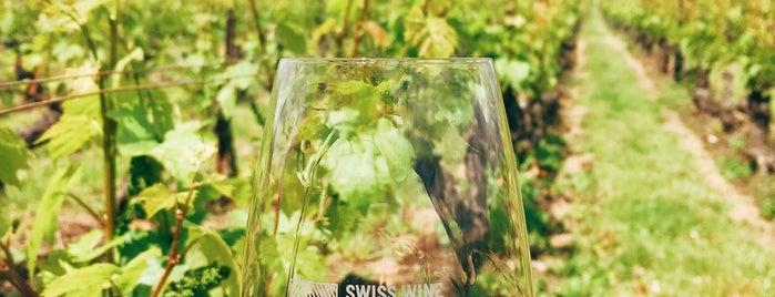 Domaine de Champvigny is one of Geneva wineries.