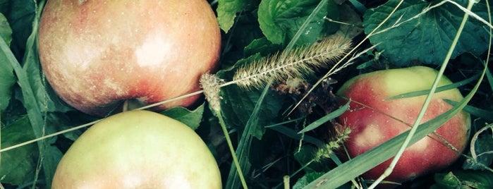 Strawberry Acres Farm is one of Locais curtidos por Sandra.