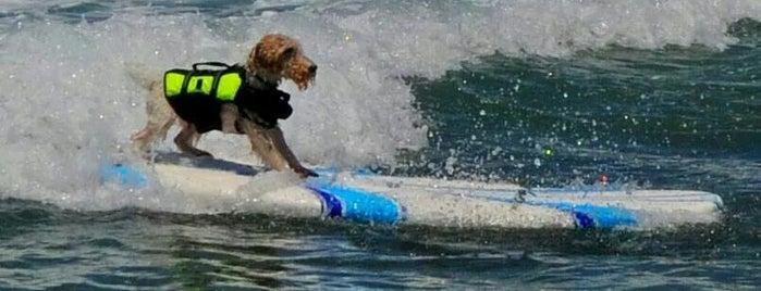 Del Mar Dog Beach is one of Posti che sono piaciuti a Muddy.