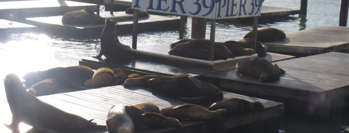 Sea Lions at Pier 39 is one of *San Francisco*.
