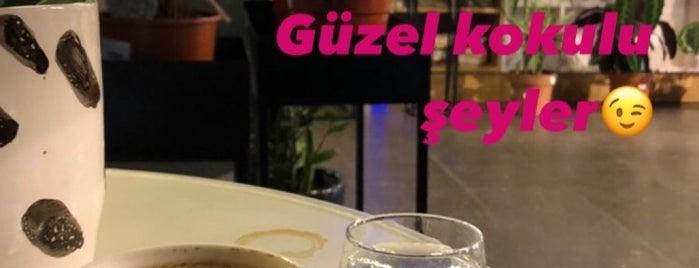 Botta Bloom is one of Gidilecek.
