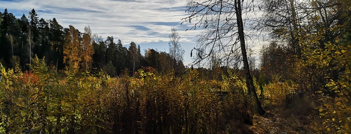 Uutelan luontopolku is one of Suomi to do.