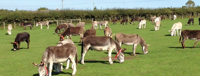 Isle Of Wight Donkey Sanctuary is one of Isle of Wight.