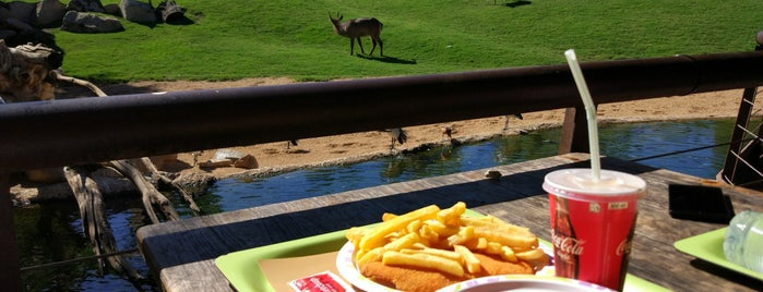 Bioparc - Cafeteria En Africa is one of Valencia.
