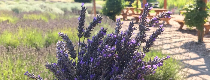 Purple Haze Lavender Farm is one of Posti che sono piaciuti a Ryan.