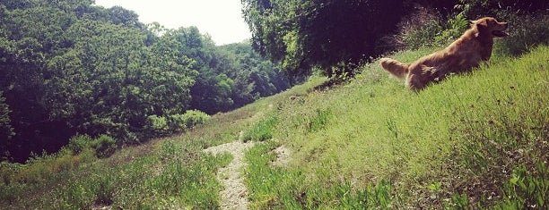 Barton Creek Greenbelt is one of America's Top Hiking Trail in Each State.