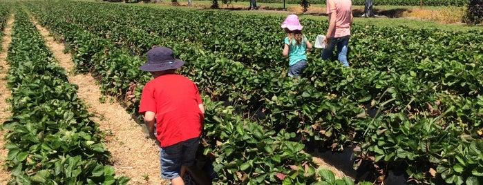 Julians Berry Farm & Cafe is one of New Zealand (North Island).