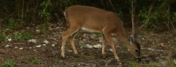 Key Deer Habitat is one of USA Key West.