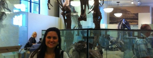 Museo Americano de Historia Natural is one of Places to go when in New York.