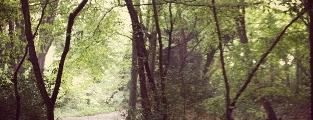 Sydenham Hill Wood is one of Ancient woodland in London.