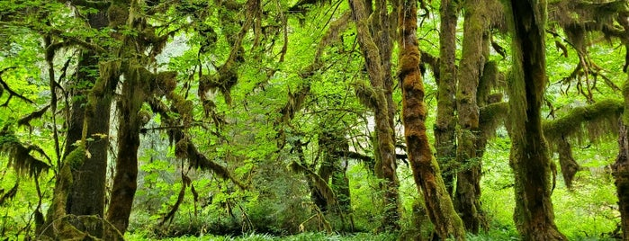 Hall Of Mosses is one of Olympic NP.
