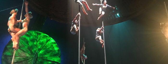 Cirque du Soleil - Luzia 2018 is one of Locais curtidos por Ara.