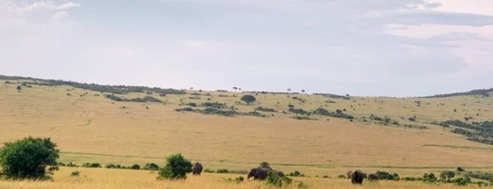 Masai Mara National Reserve is one of Kenya.