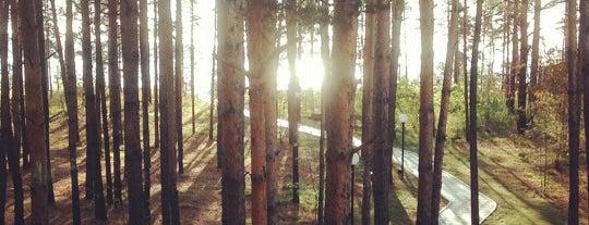 Отель Борвиха, Территория санаторияБердский is one of Siberia, Snow & Bears.