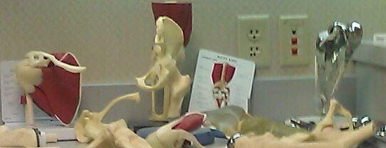 Michigan Street Orthopedic Specialists PC is one of Kellie : понравившиеся места.