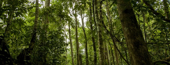 Corcovado National Rain Forest Preserve is one of Viaje a Costa Rica.