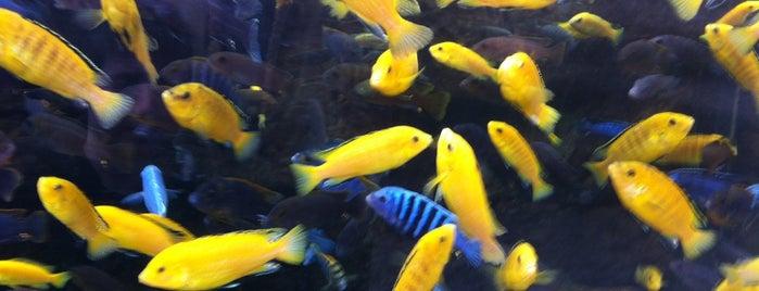 Bristol Aquarium is one of Bright Bristol and surroundings.