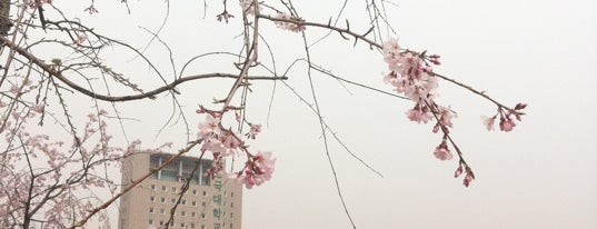 Konkuk University is one of South Korea 🇰🇷.