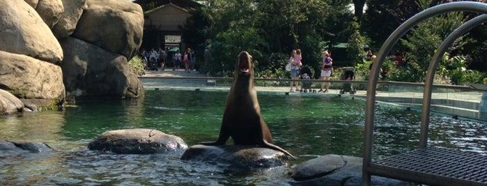 セントラルパーク動物園 is one of Aislingさんの保存済みスポット.