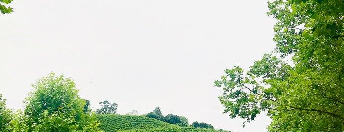Wine Garden is one of Bento Gonçalves.